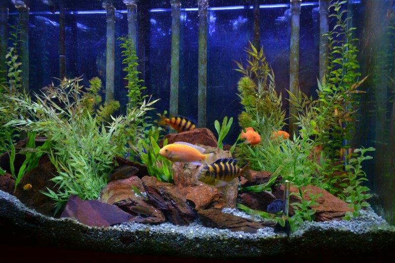 Aquarium snail infestation 1000 aquarium ideas for How to get rid of snails in fish tank